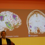 Prefrontal cortex and Amygdala